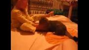 هربچه ای که با گربه در افتاد/از رو تخت میخوره زمین(اند خنده)