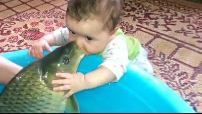 ماهی خل و چل