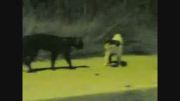 دعوای گربه ها - دوبله ی فارسی