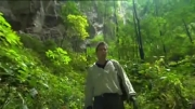 جنگلی اسرارآمیز در قلب بزرگترین غار جهان-گجت نیوز