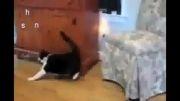 گربه های باهوش وبازیگوش!!