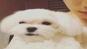 سگ بامزه ی من =ته یون