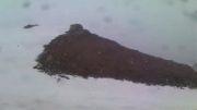 بارش برف بهاری در دنا
