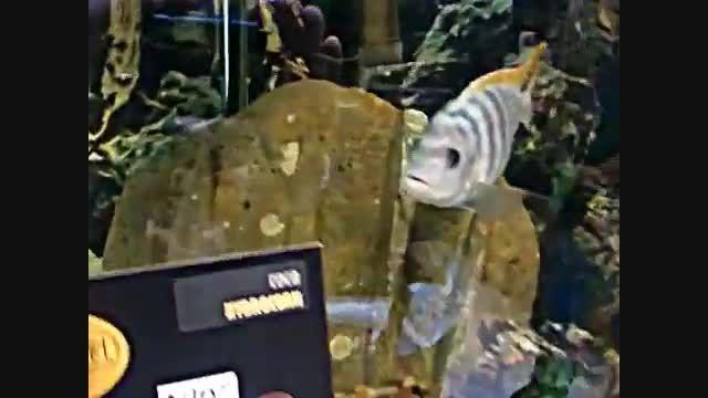 True Self Cleaning Fish Tank