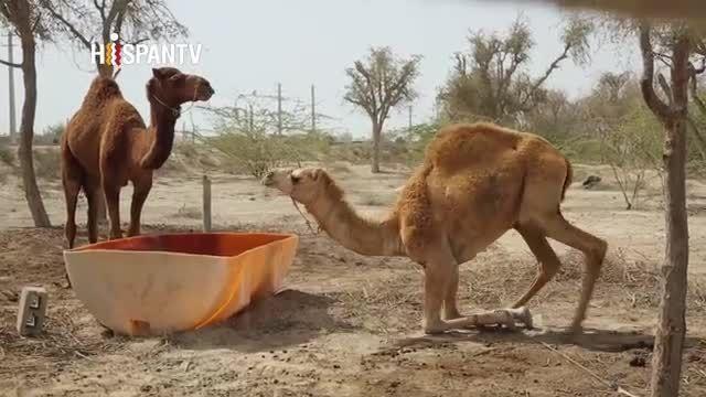 حیات وحش در جزیره قشم Wildlife in Qeshm Island