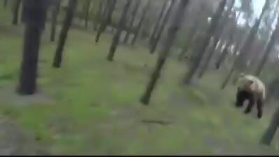 حمله خرس به یک دوچرخه سوار (Biker)