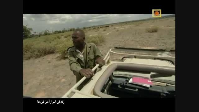 مستند زندگی اسرار آمیز فیل ها - با دوبله فارسی - قسمت 1