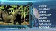 حیوانات باهوش - ده گونه باهوش از حیوانات