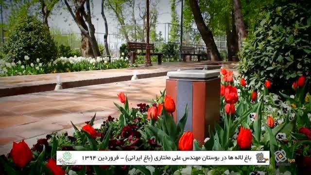 رویش لاله ها در باغ ایرانی