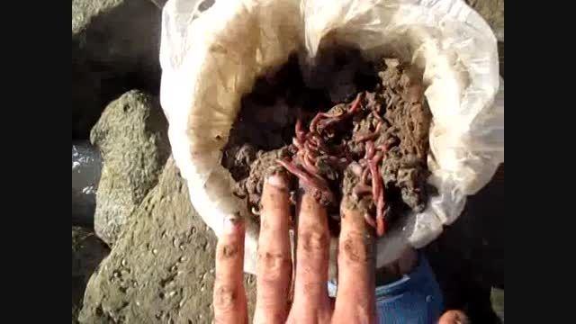 ماهیگیری در بندر گناوه - سایت اصفهان فیشینگ