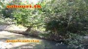 رودخانه کوچک و تمیز جنگل گلستان