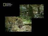 مستند  قاتلین بالفطره - جنگل های استوایی-National Geographic Built For The Kill Rain Forrest.mp4