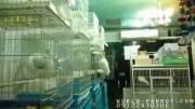 طوطی های کاکادو پرنده فروشی تخصصی طوطی سانان منقارکج ها
