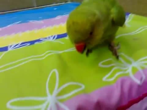 پرنده خشمگین(angry bird) جالب، دیدنی و آموزشی