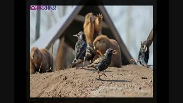 تصاویر جذاب دنیای حیوانات اسلایدشو گلچین صفاسا