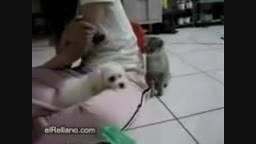 دعوای سگ و گربه ی گشاد !!!!