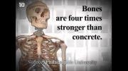 10 حقیقت جالب در مورد بدن انسان که نمیدانید!حتما ببینید