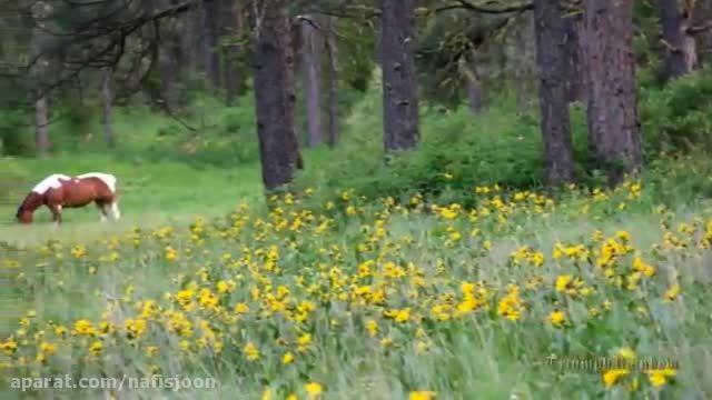 طبیعت زیبا با موسیقی آرامش بخش