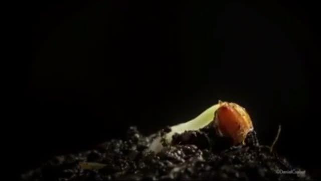 تایم لپس زیبا از رشد گیاهان