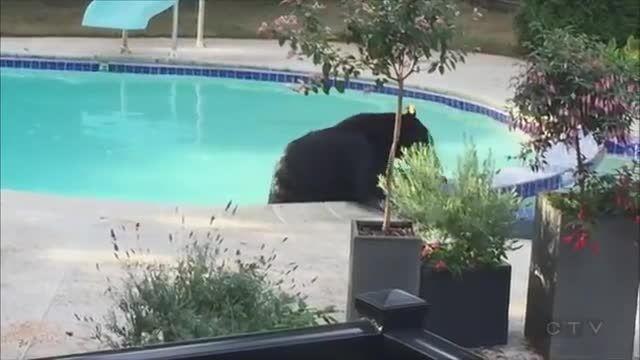 خرسه اونجا چیکار میکنه؟(تو استخر)