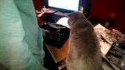 ترسیدن خنده دار گربه از دستگاه تایپ (آخر خنده)......