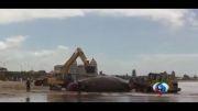 ویدیو؛ نهنگ غول