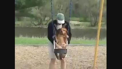 سگی که خیلی تاب سواری دوست داره!!