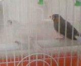 پرنده فنچ