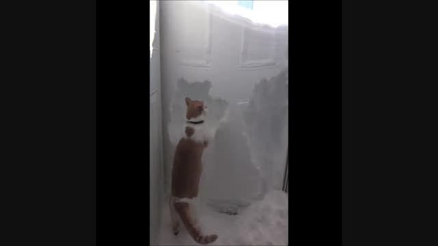 گربه خرابکار وبازیگوش!!