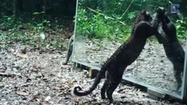حیوانات جنگل مقابل آینه