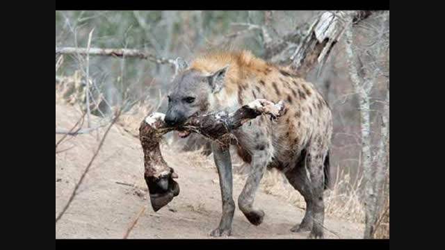 حیوانات خطر ناک دنیا