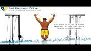 حرکات بدن سازی بازو - Pull Up Exercise