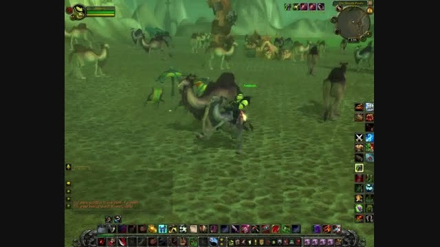 آموزش گرفتن مونت شتر (camel) دربازی wow 4.3.4