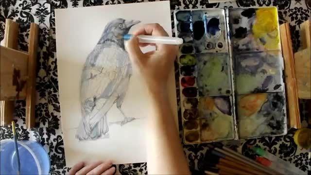 نقاشی کلاغ - تلفیق مداد سیاه با آبرنگ