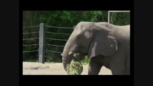 کلیپ آموزش نامهای حیوانات به زبان انگلیسی