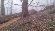 قطع درخت