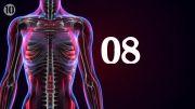100 چیز که باید بدانید | قسمت هشتم | بدن یک انسان