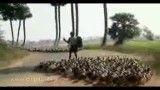 رژه اردکها ....نظم و ترتیب رو باید از اینا یاد گرفت..............