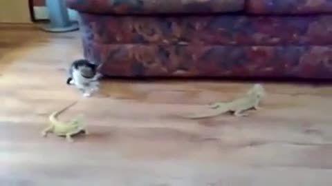 گربه سکته کرد