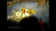 حمله شیر ها به مربی سیرک - وحشتناک