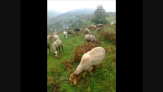 روستای ساخمرس بسیار زیبا در هزار جریب نکا.مصطفی بابایی
