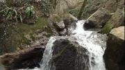 دئو-جنگلی زیبا در روستای بالاجاده- میان برنامه نوبهار