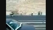 تصادف مرگبار  شاخ به شاخ اتوبوس دانشجویان در جاده شیراز