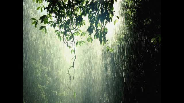 صدای باران در جنگل * آرامش بخش* باران پاییزی* خوآب آور*