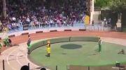 دعوا خرس و میمون در سیرک سر دوچرخه سواری :)))