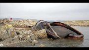 بزرگترین جانداران دنیا