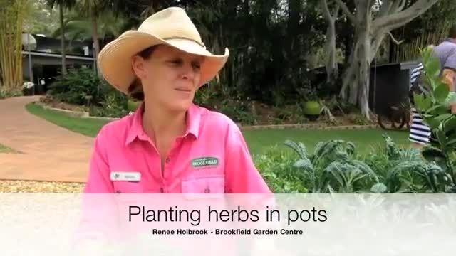 آموزش کاشت و پرورش گیاهان دارویی در گلدان