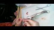 تشریح ماهی در کلاس های تابستان - فیلم 2