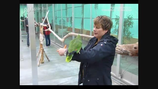 مرکز نگهداری و آموزش طوطی سانان در آلمان 1