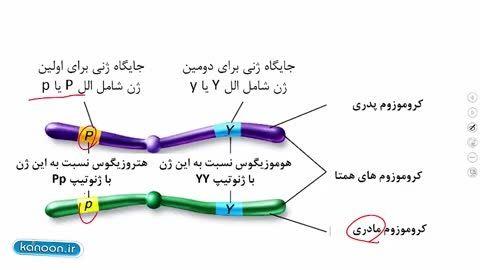ژنتیک از زیست پایه کنکور